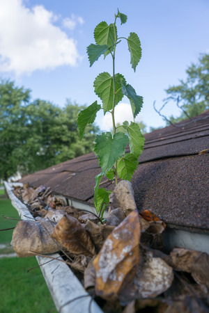 How Important Is It To Keep Your Gutters Clean Seattle