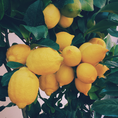 CleanWithLemons-HusserWindowCleaning